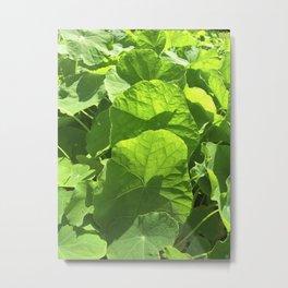 green nasturtium leafs IV Metal Print