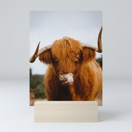 Scottish Highland Cow Sticking Long Tongue in Nose | Horns | Animal Photography Mini Art Print