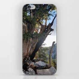 Ancient Bristlecone Pine Forest #3 iPhone Skin