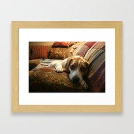 Sleepy Bruno  Framed Art Print