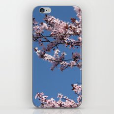 Sakura Blossoms iPhone Skin