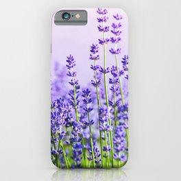 Lavender 15  iPhone Case