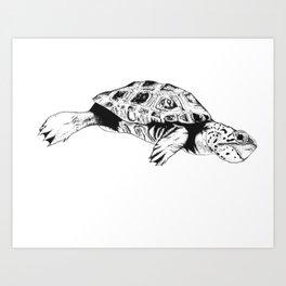 Malaclemys Terrapin (R) Art Print