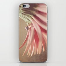 Pixie Hat iPhone & iPod Skin