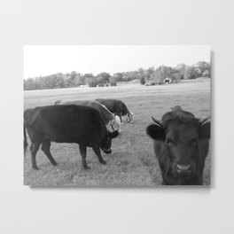 grazing in the grasses Metal Print