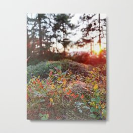 Evening glow in the forest Metal Print