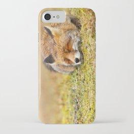 Comfortably Fox (red fox sleeping) iPhone Case