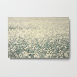 Alone in the canola field Metal Print