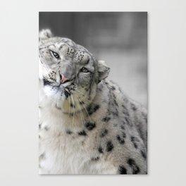 Leaning Snow Leopard Canvas Print