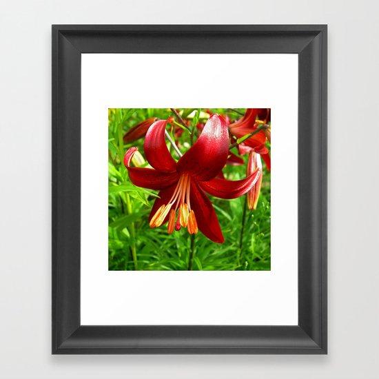 red lily Framed Art Print