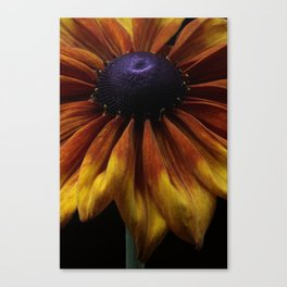 Rudbeckia Summerina Flower Canvas Print