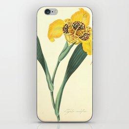 Roscoe, Margaret, 1786, 1840, Floral, Illustrations, of, the, Seasons, 1831, Delphinium, Grandifloru iPhone Skin