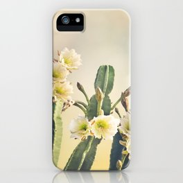 San Pedro Cactus with Beautiful White Flowers iPhone Case