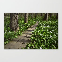 Wildflower Walkway Canvas Print