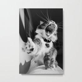 Cat Sofia Metal Print