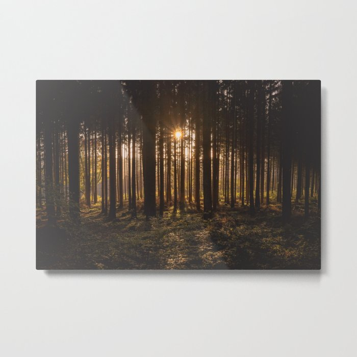 Golden Forest Park Metal Print