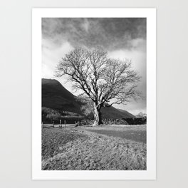 Sunlit tree on the shore of Buttermere. Lake District, UK. Art Print