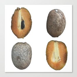 Sapodilla Sketches Canvas Print
