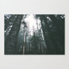 Forest XVIII Canvas Print