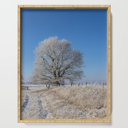 Winter Idyll In The North Of Germany With Majestic Old Tree Serving Tray