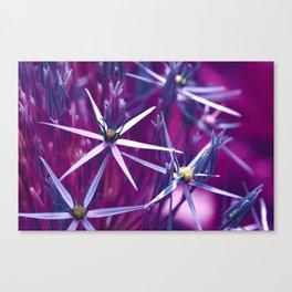 Allium Violet 91 Canvas Print