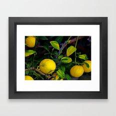 Winter Lemons Framed Art Print