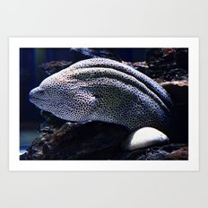 Honeycomb Moray Eel Art Print