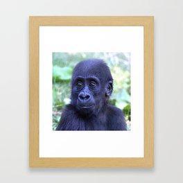 CArt Gorilla Baby Framed Art Print