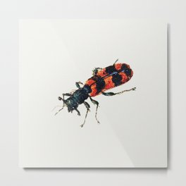 Insect from Sheet of Studies of Nine Insects (1660-1665) by Jan van Kessel Metal Print