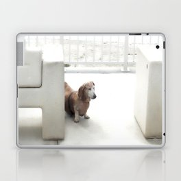 Dachshund, Carlsbad, California Laptop & iPad Skin