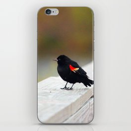 Red Winged Blackbird iPhone Skin