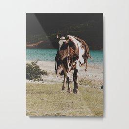 Boss cow  Metal Print