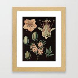 Botanical Almond Framed Art Print