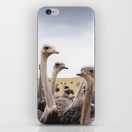 Ostriches iPhone Skin