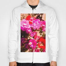 The beauty of the colors. Hoody