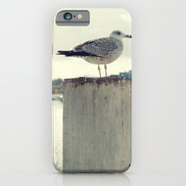 Möwe Kiel iPhone Case
