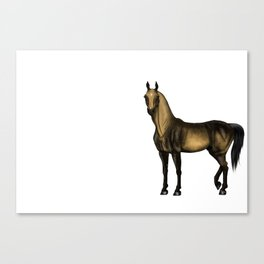 Alex without Tack Canvas Print