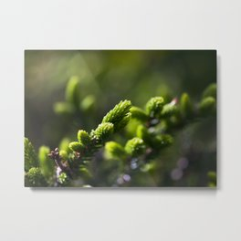 Evergreen II Metal Print