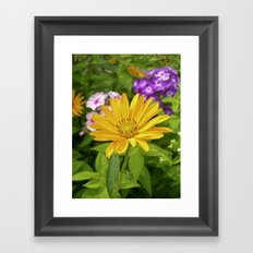 garden flower II Framed Art Print