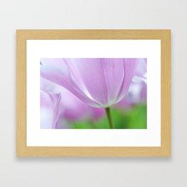 Airy Purple. Tulips of Keukenhof Framed Art Print