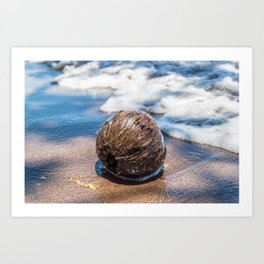 Coconut in Sea-foam Art Print