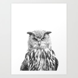 Black and white owl animal portrait Art Print