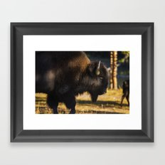 Yellowstone National Park - Bison Framed Art Print