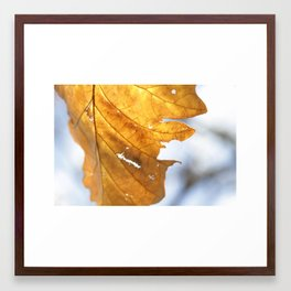 Autumn Leaf #1 Framed Art Print