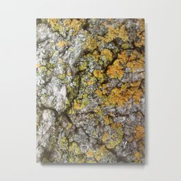 Bark and Lichen Metal Print