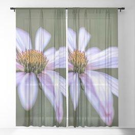 Summer Echinacea flower Sheer Curtain
