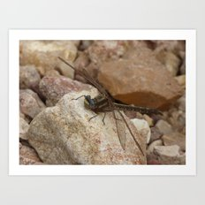 dragonfly 2016 Art Print