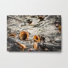 carp Metal Print