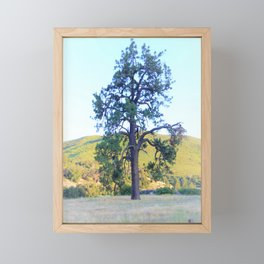 Tall Pine in the California Meadow by Reay of Light Framed Mini Art Print