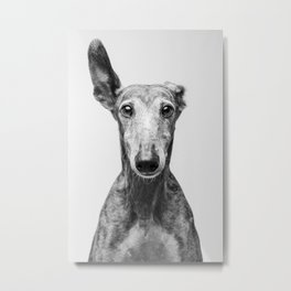 Rayito el Galgo - Dog portrait - Greyhound Metal Print